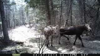 Download Trail Camera Photos- Best of 2014-2015 Video