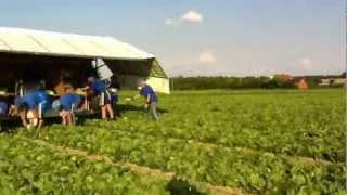 Download Українці на роботі в Польщі Video