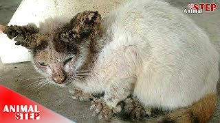 Download Stray Cat Rescued From Severe Mange Video