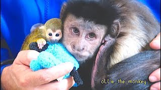 Download Baby Monkey oLLie   Hanging with MonkeyBoo! Video