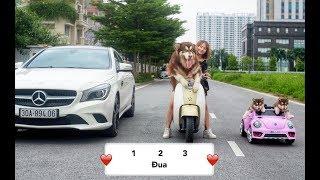 Download Chó Mật đi đua xe với chủ - Alaska Dog Go racing - Mật Pet Family Video