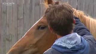 Download Uwe Weinzierl - Natural Horsemanship Trainer Video