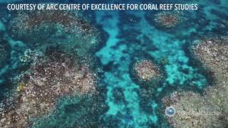 Download Coral bleaching at the Great Barrier Reef Video