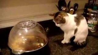 Download Cat Terrorized by Popcorn Video