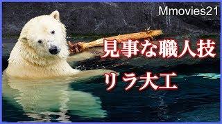 Download 立てて削る!リラの大工仕事が器用過ぎる Polar Bear ″Lila″cuts tree for dexterity Video