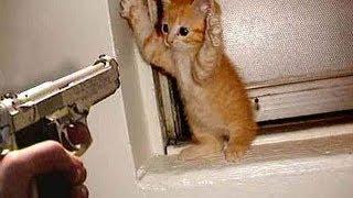 Download Kucing Main Tik Tok Video