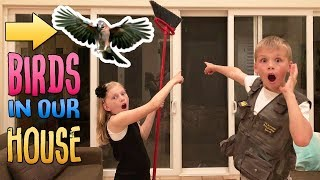 Download Wild Birds in our House & Another Flash Flood || Mommy Monday Video