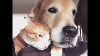Download Cat Does NOT Love Road Trips With His Dog | The Dodo Video
