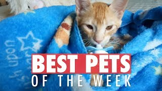 Download Best Pets of the Week Video Compilation| January 2018 Week 4 Video