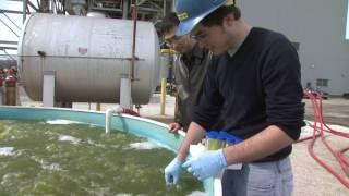 Download Turning Algae Into Fuel Video