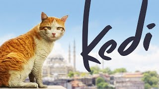 Download Kedi - Full Length Documentary Video