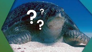 Download What's Inside A Turtle Shell? | Earth Unplugged Video