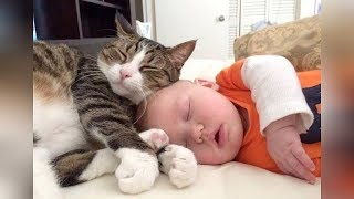 Download The FUNNIEST and CUTEST videos you'll see today! - Super CUTE BABIES sleeping with CATS & DOGS Video