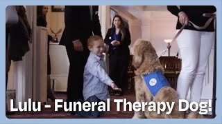 Download Funeral Therapy Dog Turns Sadness Into Smiles Video