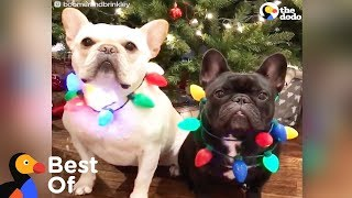 Download Dogs and Other Animals With Holiday Spirit: Holiday Animal Compilation | The Dodo Best Of Video