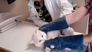 Download Unhappy Cat Video