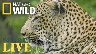 Download The Predators Get Their Prey Today – Day 78 | Safari Live Video