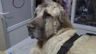 Download Açlıktan Ölmek Üzere Olan Köpeği Hayvansever Gençler Kurtardı Video