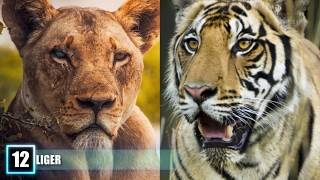 Download 12 Most SHOCKING Real Animal Hybrids! Video