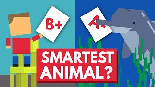 Download Which Animal Is The Smartest? Video