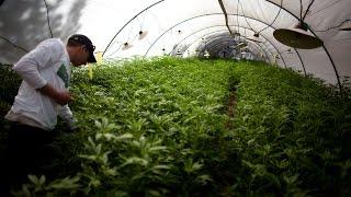 Download La marihuana le cambió la vida a un hispano en Colorado Video