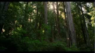Download REDWOOD NATIONAL PARK IN 4K (Ultra HD) Video