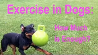 Download Exercise in Dogs: How Much is Enough? Video