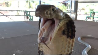 Download Reptile Reality Thailand part 1 Video