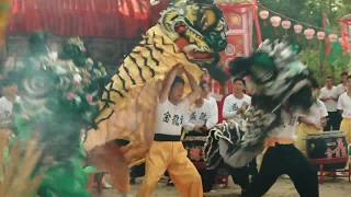 Download ip man final fight lion dance scene Video