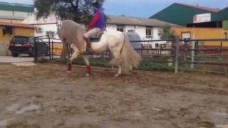 Download LOTO VII - Stunning fairytale PRE stallion quiet and easy basic - For Sale - TBSH Video
