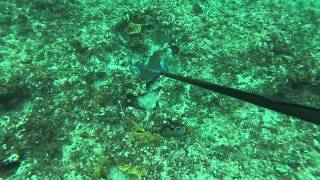 Download Elbow Cay Bahamas 2014 Video