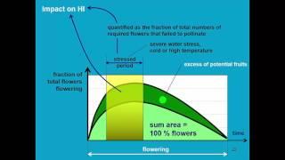Download Yield response to water AquaCrop - Training module Nr. 4.6 (unit 4. Crop), April 2016 Video