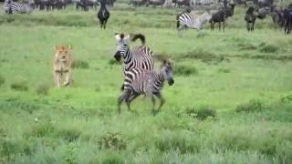 Download LEONA CAZANDO ORIGINAL HD Video