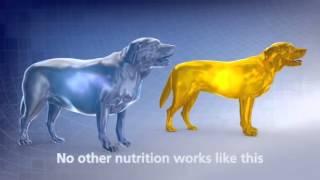 Download Hills Metabolic Diet Video