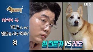 Download 세상에 나쁜 개는 없다 - 파괴의 신 레오로부터 집안을 사수하라 #003 Video