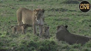 Download safariLIVE - Sunrise Safari - September 17, 2018 Video