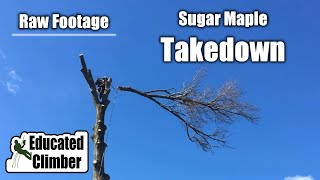 Download Sugar Maple Takedown: 3-Point Setup & Basic Rigging | Arborist Basics Climbing, Rigging, Cutting Video