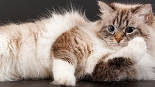Download 7 Things You May Not Realize About Your Cat Video