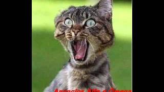 Download gato gritando.TOQUE PARA CELULAR Video