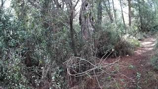 Download Израильский лес 6 ноября 2017 Video