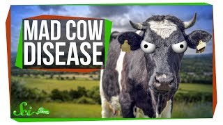 Download What Happened to Mad Cow Disease? Video