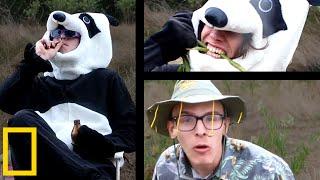 Download Giant Panda Mating Season | Wildlife Documentary Video