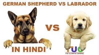 Download German shepherd VS Labrador in Hindi   Dog Comparison   The Ultimate Channel Video