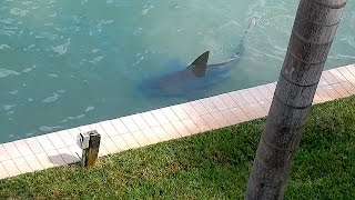 Download 9ft Bull Shark Spotted In Florida 'Backyard' Video