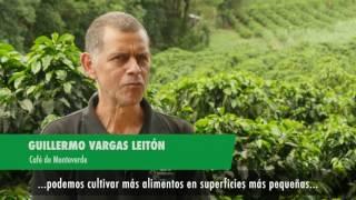 Download El Estado de los Bosques del Mundo 2016 Video