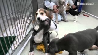 Download Tierheim Bamberg bekommt 20 Hundewelpen Video