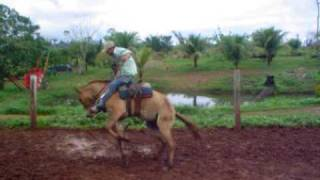 Download Montaria em Burro 001 - PA Video