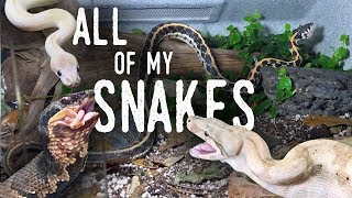Download Feeding ALL of my SNAKES (Featuring my New COTTONMOUTH!) Video