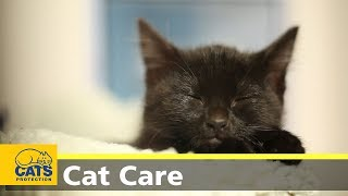 Download Kitten care part two: kittens at home Video
