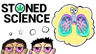 Download Two Stoned Guys Try To Explain The Respiratory System   STONED SCIENCE Video